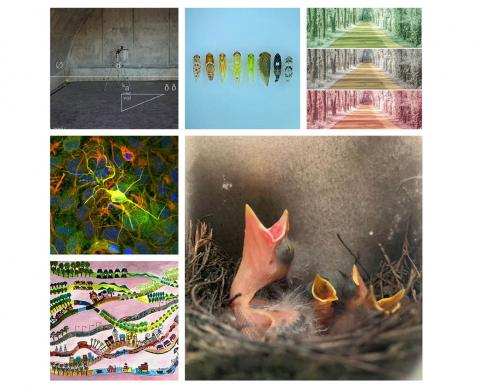 The six winning images from the competition.