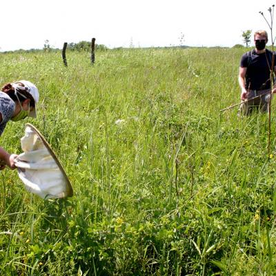 Dana and Tetlie stand in the tall prairie vegetation, which they inspect closely. Each carries a white canvas net.